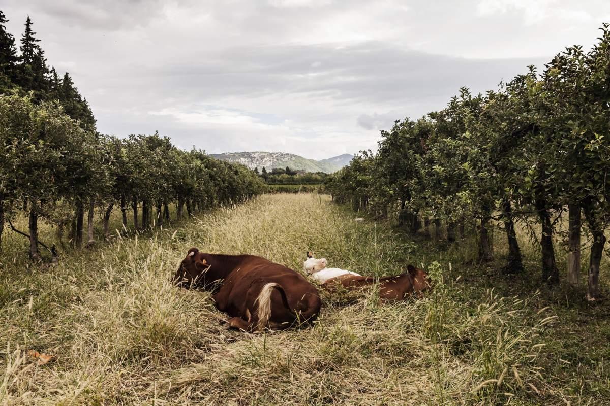 Agroforesterie à la ferme de la Durette