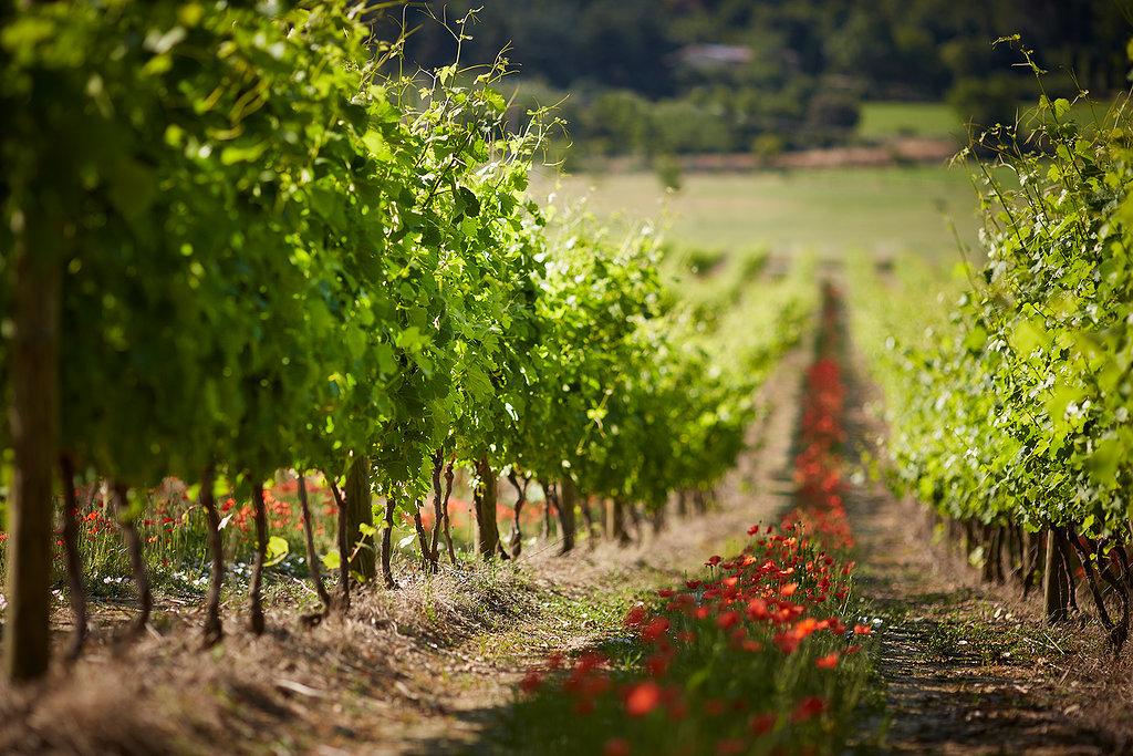 Agriculture raisonnée – Média des innovations agricoles
