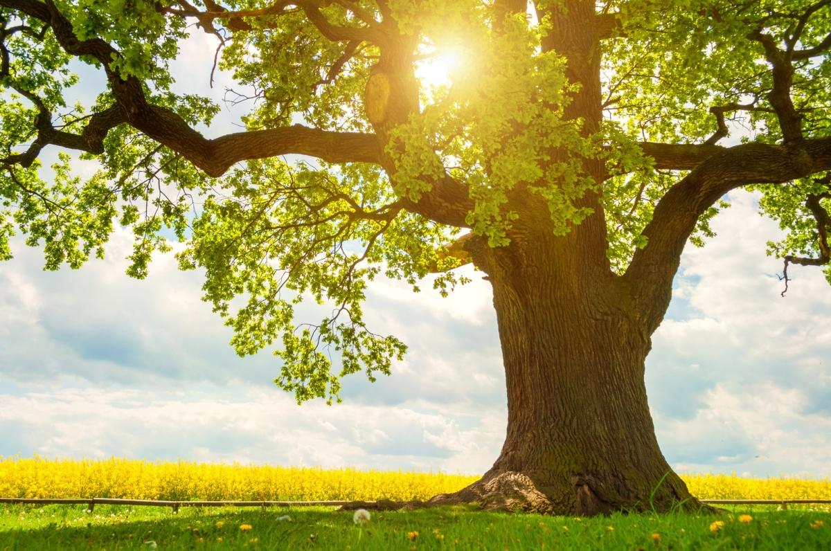 Agroforesterie : l'impact des arbres sur la production légumière