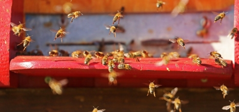 nature-insect-bee-hive-bees-40063.jpeg
