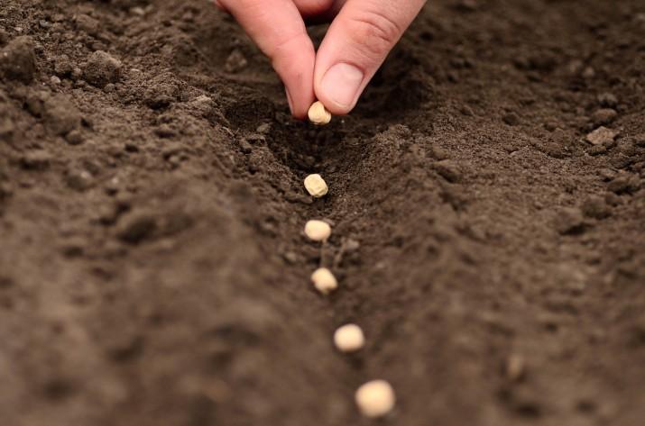 graines-disponiblesdes-varietes-traditionnelles-multipliees-selectionneesaussi-varietes-modernes-choisies-criteres-rusticite-saveur_0_1398_926.jpg